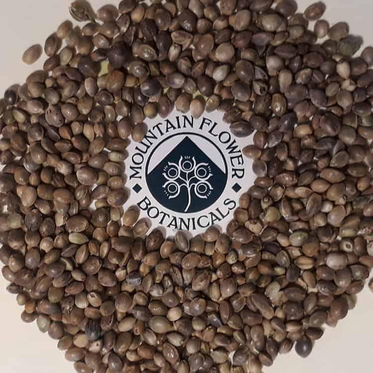 hemp seeds with Mountain Flower Botanicals logo