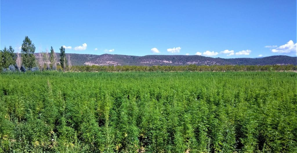 Mountain Flower Botanicals hemp farm and the source of our hemp extract softgels.