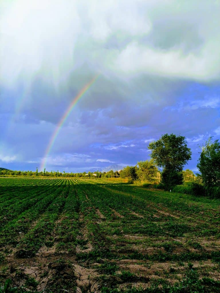 Rainbow over Mountain Flower Botanicals farm, growers and makers of high CBD balms.